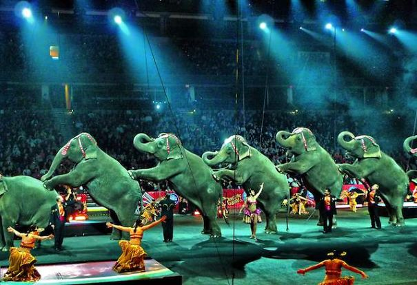 iran-becomes-9th-country-to-ban-use-of-wild-animals-in-circuses__605