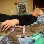 Oroszlánt, zebrát és krokodilt is tartanak háziállatként a britek