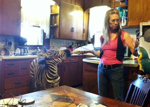 zebra-parrot-duijpg-b985f4f43f7a0321