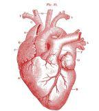 Feltárták a stressz szerepét szív- és érrendszeri betegségek előidézésében
