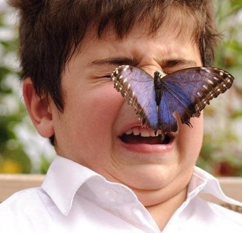 Ne engedjünk mindenféle rovart magunkra szállni!